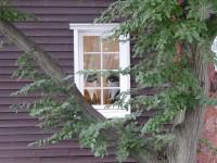 窓にも誰かが・・・
